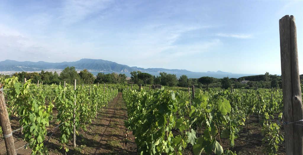 Vista Panoramica dal Vesuvio