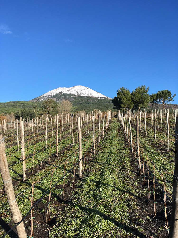 Vesuvio innevato in Vigna