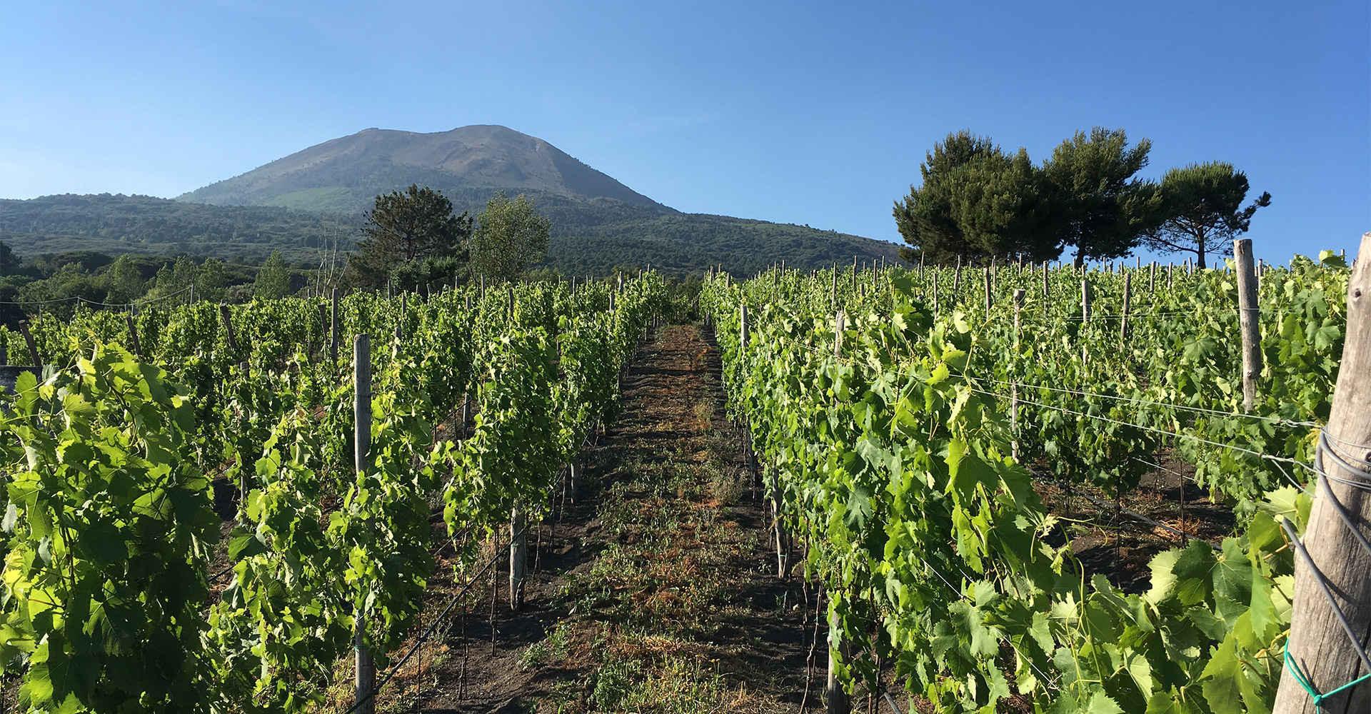 Vigne Florami Vino del Vesuvio