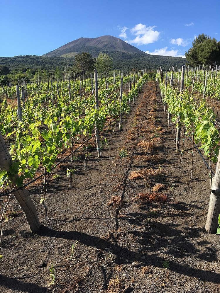 Viticoltura Piede Franco sul Vesuvio