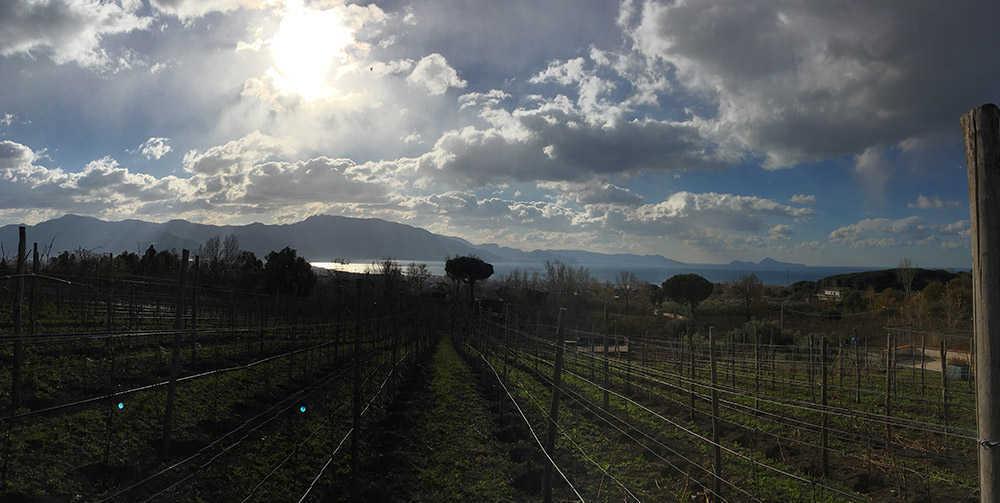 Vista Mare Vigneti Parco Nazionale del Vesuvio